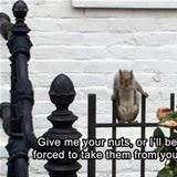 give me your nuts