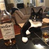whiskers whisky