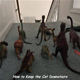 keeping the cat downstairs