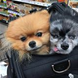 couple of dogs in a bag