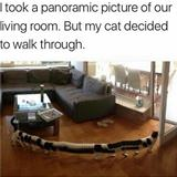 panoramic cat