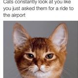 that cat look
