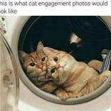 a cat engagement photo