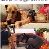 snuggle buddies for life