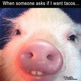do you want tacos