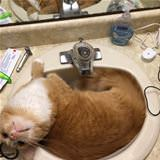loves me this sink