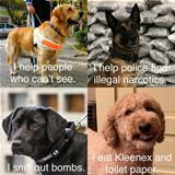 different kinds of dogs