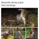 super hero squirrels
