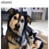you are adopted
