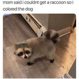 no racoons