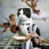 me and my cat how it feels