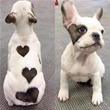 the heart dog