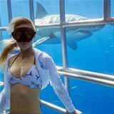 chilling with sharks