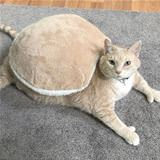 i am a turtle now