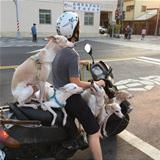 guy traveling with his dogs