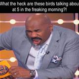 what are the birds talking about