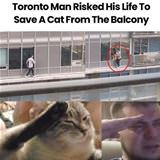 saves a cat