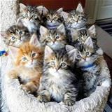 a bunch of kittens