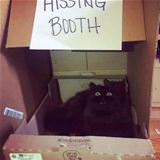 A Hissing Booth