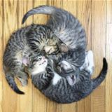 the circle of cats