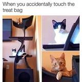 touched the treat bag